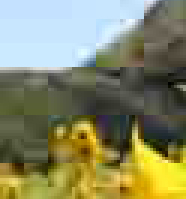 Auringonkukka: maisemasta ote JPG iso pakkaustaso