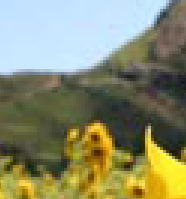 Auringonkukka: maisemasta ote JPG keskivertopakkaus